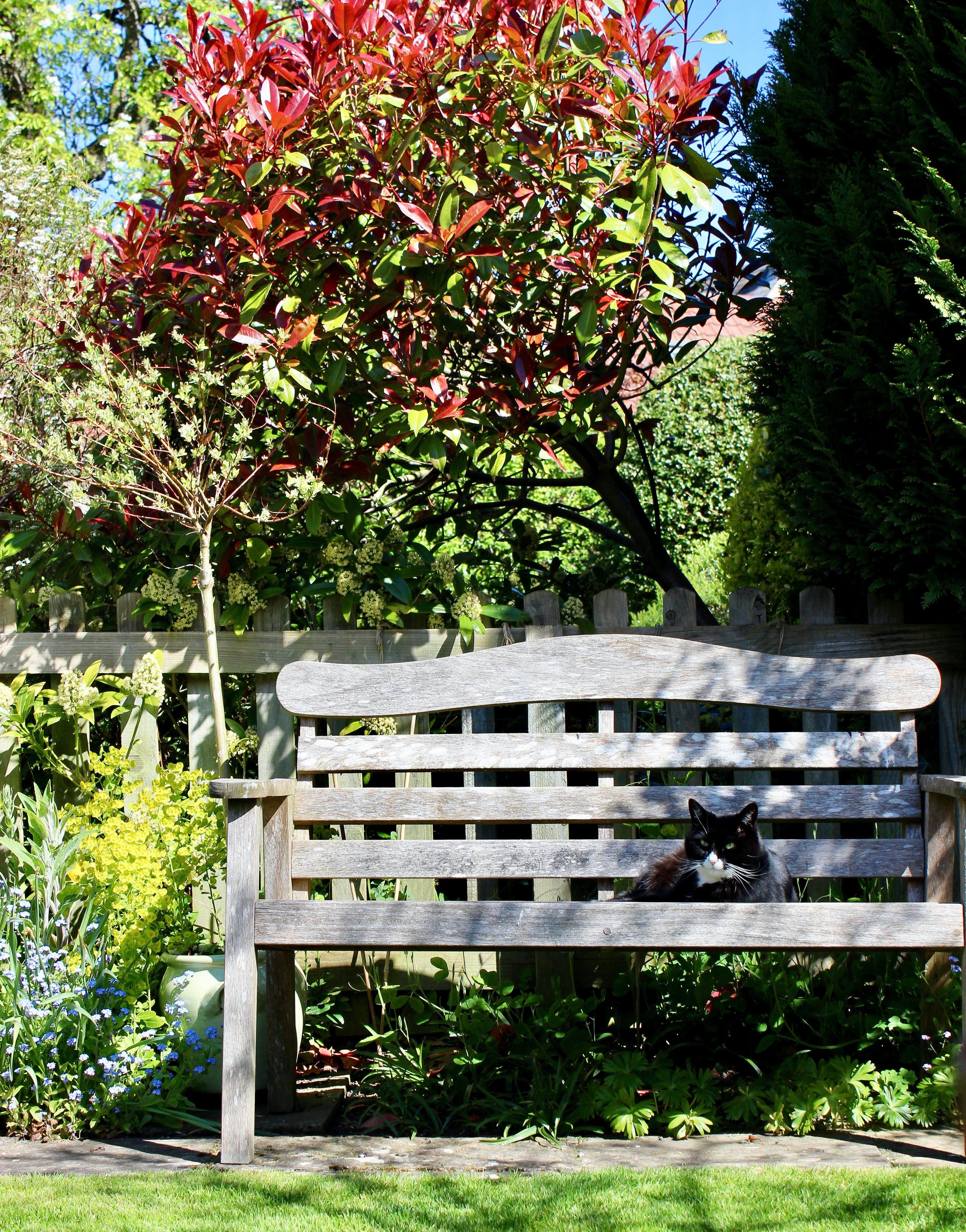 mały ogród z ławką
