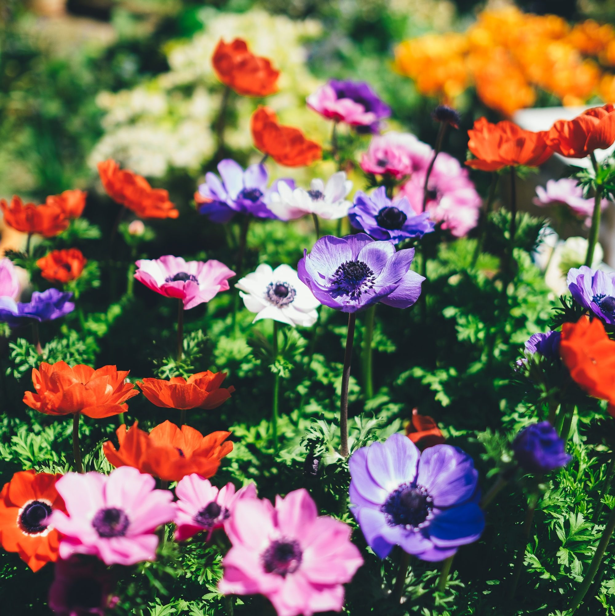 wiosenne kwiaty do małego ogrodu