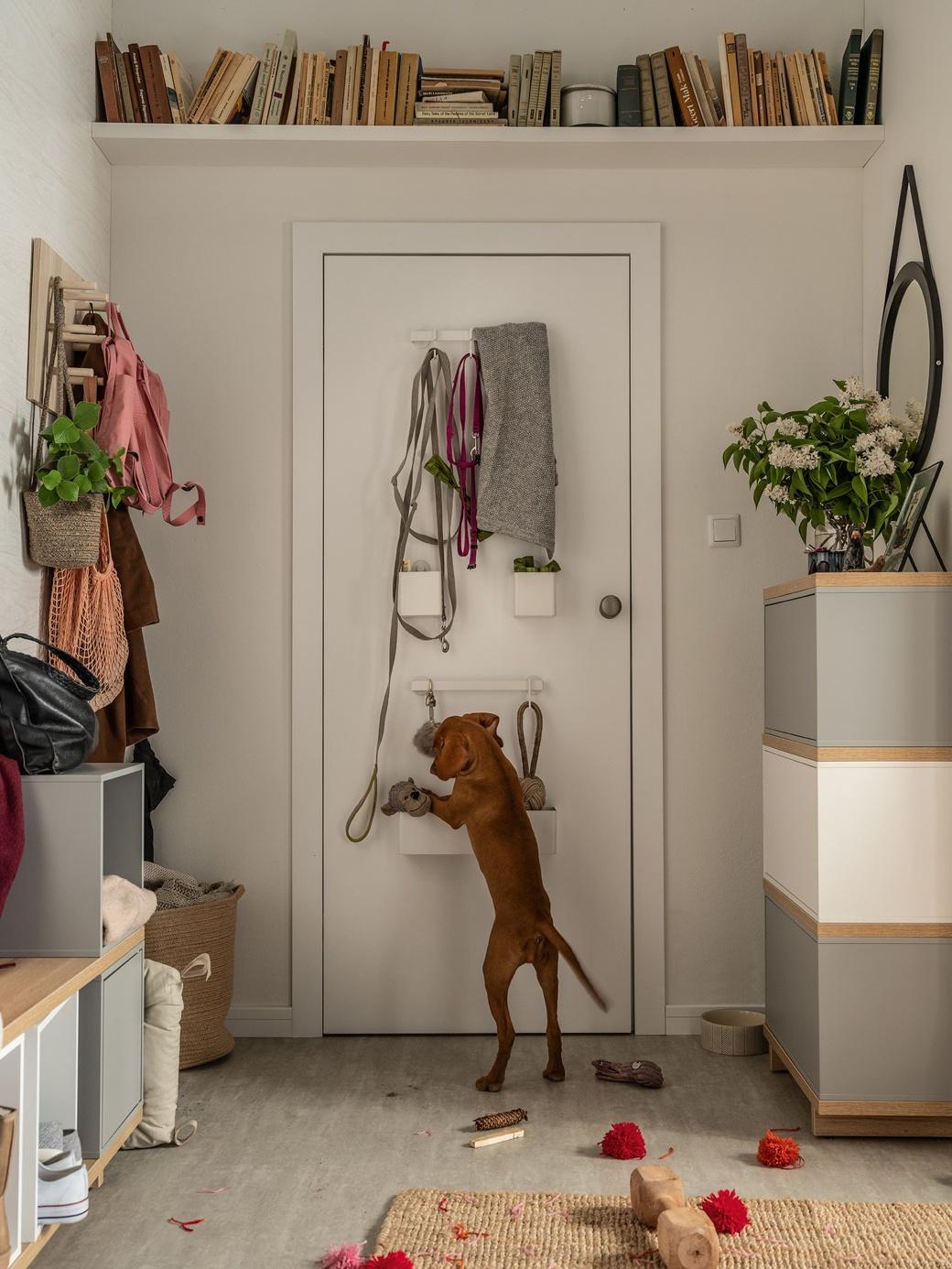 Pies skacze na drzwi z pojemnikami na akcesoria