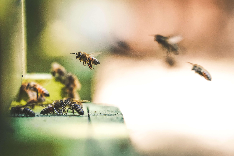 ogród przyjazny pszczołom